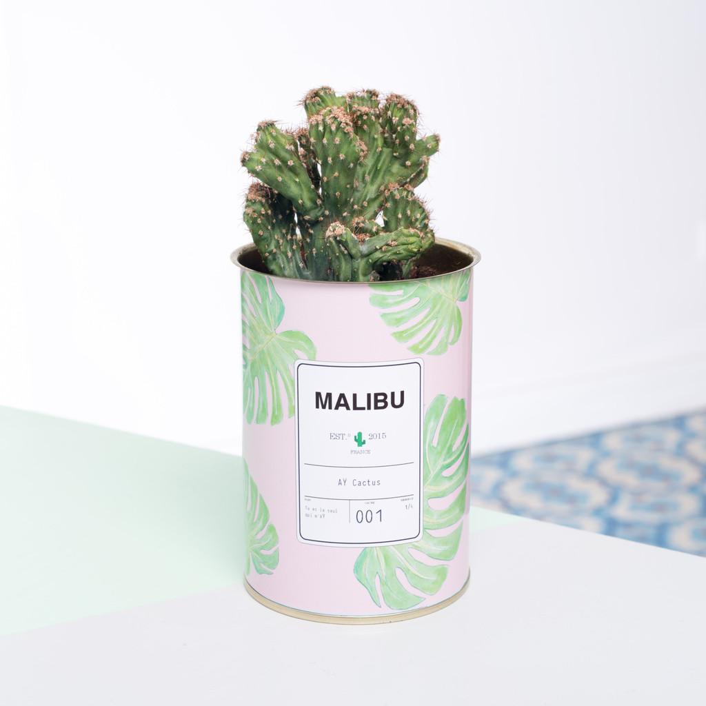 cactus-deco-ay