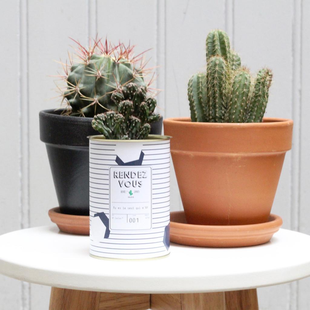 deco-cactus-personnalisable
