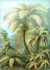 tableau en plexi-alu Filicinae de Ernsr Haeckel